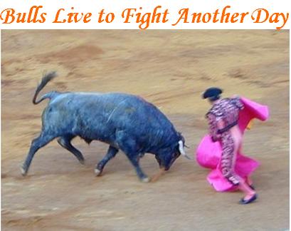 Bulls Live